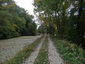 C & O Canal Path