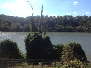 view of the Potomac River from the C & O Canal Path near Washington, DC